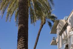 La palmera es retirarà dimecres 6 de juny