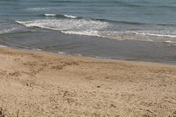 S'autoritza la presència de gossos a la platja naturista durant l'estiu