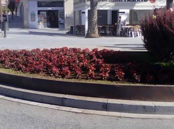 Replantada de flors a parterres de la ciutat