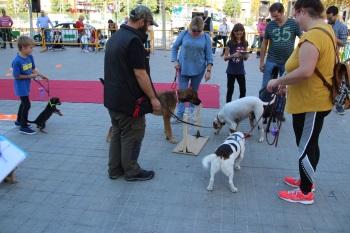 Festa de l'Animal, 3