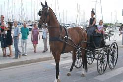 Dissabte i diumenge es durà a terme la festa del Cavall