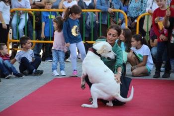 Desfilada a la passarel·la de la Festa de l'Animal