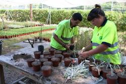 Al viver del Tegar fan planter a partir d'esqueixos de plantes adaptades al nostre clima