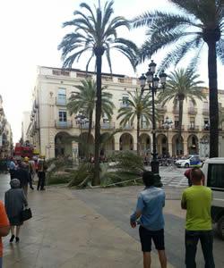 Palmera plaça de la Vila
