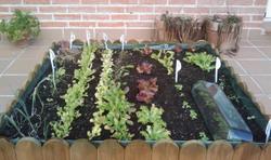Cada vegada hi ha més gent que cultiva el seu petit hort urbà a casa