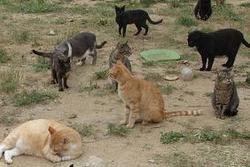 La nova ordenança busca afavorir i regular la convivència entre persones i animals a la ciutat
