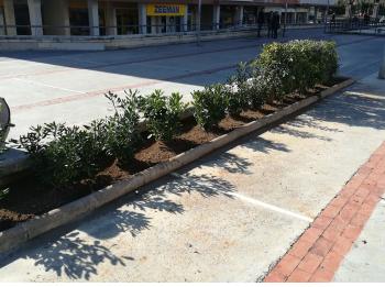 plantació d'arbustives a la plaça de Soler i Carbonell