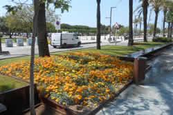 passeig del Carme amb les noves flors