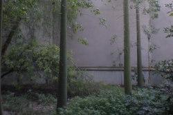 Espai verd municipal sense tractament amb herbicides