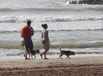 Durant l'estiu està prohibit que els gossos entrin a la platja