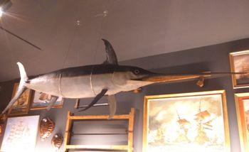 El peix espasa ha estat col·locat a l'Espai Far, penjant del sostre del Museu de Curiositats Marineres Roig Toqués