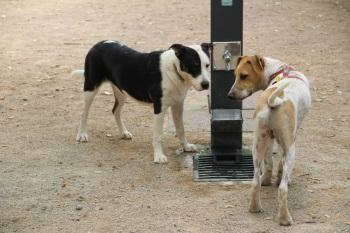 Obertura espai per gossos 2