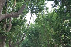 VNG tindrà quatre noves zones de bosc a la ciutat