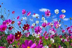 Darreres activitats de l'Àgora de Primavera