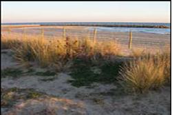 La Platja Llarga de Vilanova és un espai natural costaner que cal protegir