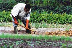 L'agricultura pot ser un factor per reconstruir Haití