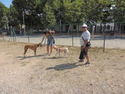Aquest és el segon espai d'esbarjo per a gossos que s'habilita a la ciutat